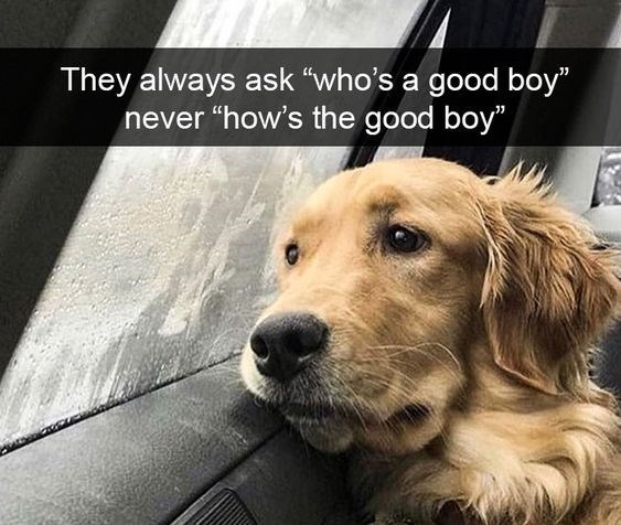 "Dog - They always ask ""who's a good boy"" never ""how's the good boy"""