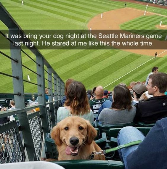 Product - t was bring your dog night at the Seattle Mariners game last night. He stared at me like this the whole time. ICHIP