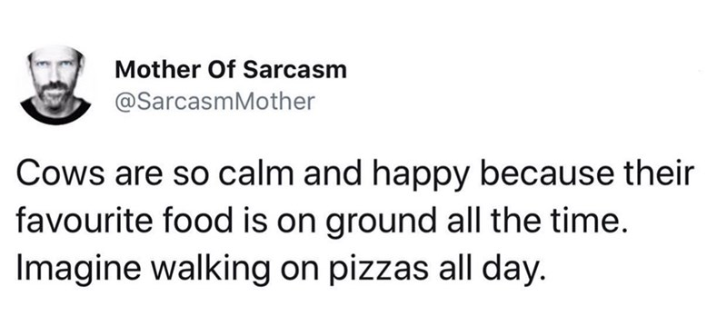 Text - Mother Of Sarcasm @SarcasmMother Cows are so calm and happy because their favourite food is on ground all the time. Imagine walking on pizzas all day.