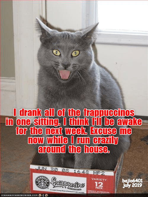 cat meme frappuccino funny cats - 9338049792