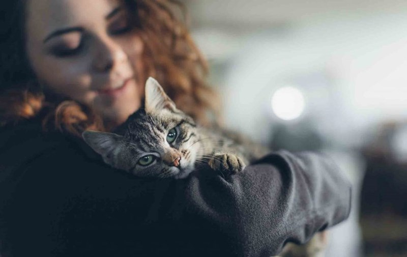 cats bonding study