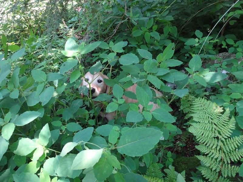 missing dog - Leaf