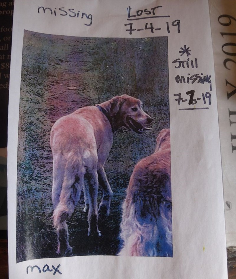missing dog - Text - g a rop missing Lost 7-4-19 foo or all t n S8 misi 7-7-19 ed max Y 2019