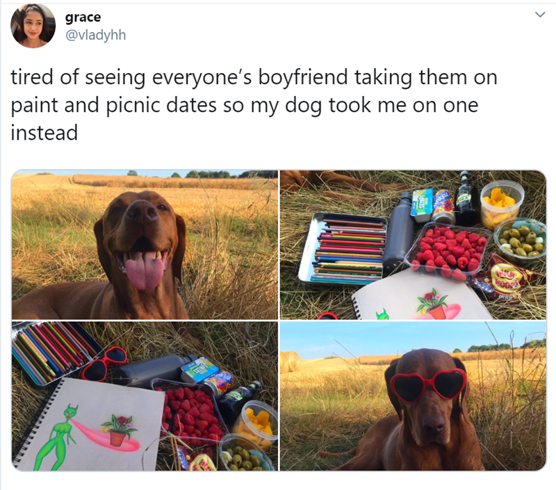 Dog - grace @vladyhh tired of seeing everyone's boyfriend taking them on paint and picnic dates so my dog took me on one instead