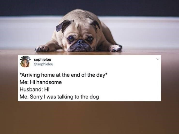 Dog - sophielou @sophielou Arriving home at the end of the day* Me: Hi handsome Husband: Hi Me: Sorry I was talking to the dog