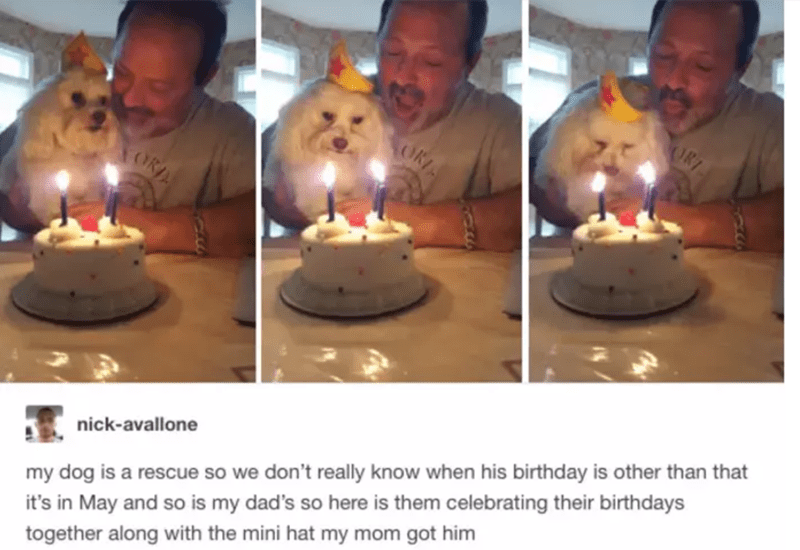 Lighting - ORT OKI TORA my dog is a rescue so we don't really know when his birthday is other than that it's in May and so is my dad's so here is them celebrating their birthdays nick-avallone together along with the mini hat my mom got him