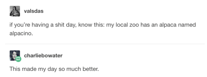 Text - valsdas if you're having a shit day, know this: my local zoo has an alpaca named alpacino. charliebowater This made my day so much better.