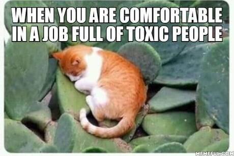 cat memes - 9338311680