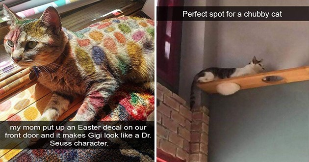 wholesome cat snaps funny
