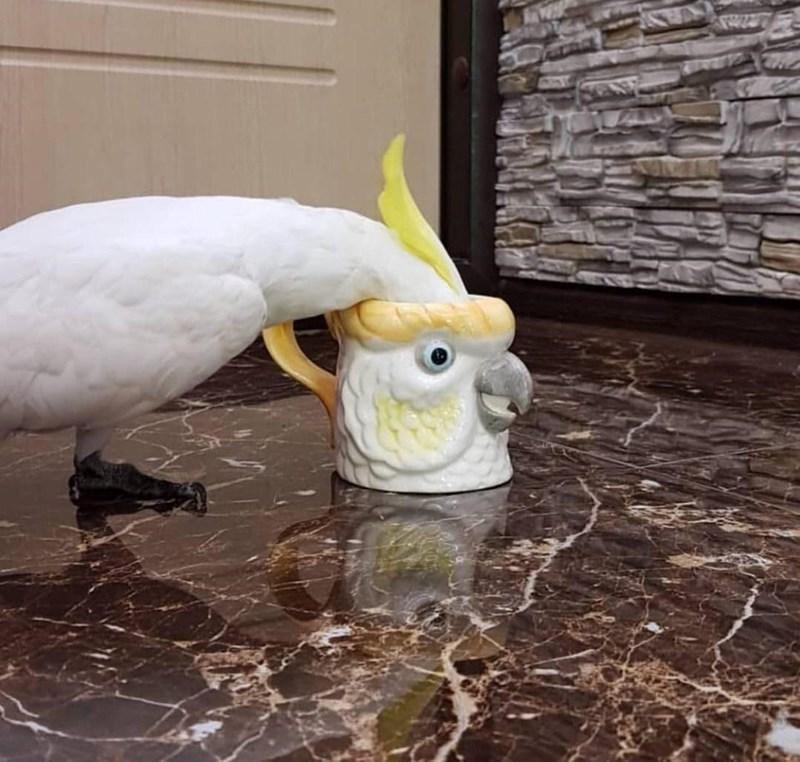 Bird - N
