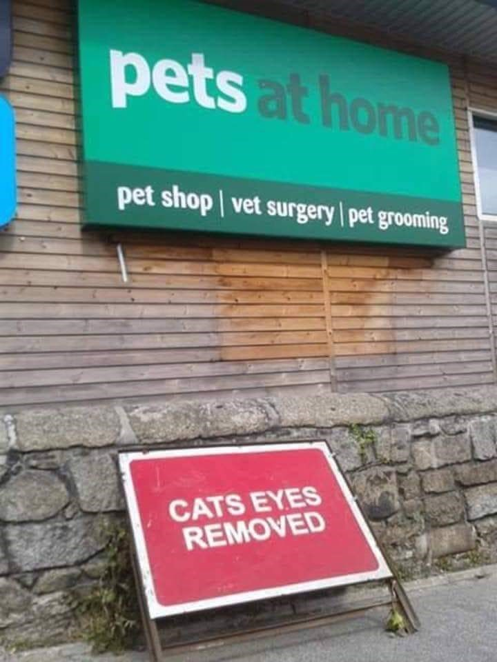 cursed - Property - pets at home pet shop vet surgery pet grooming CATS EYES REMOVED
