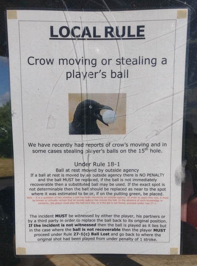 Advertising - LOCAL RULE Crow moving or stealing a player's ball We have recently had reports of crow's moving and in some cases stealing player's balls on the 15th hole. Under Rule 18-1 Ball at rest moved by outside agency If a ball at rest is moved by an outside agency there is NO PENALTY and the ball MUST be replaced, if the ball is not immediately recoverable then a substituted ball may be used. If the exact spot is not determinable then the ball should be replaced as near to the spot where