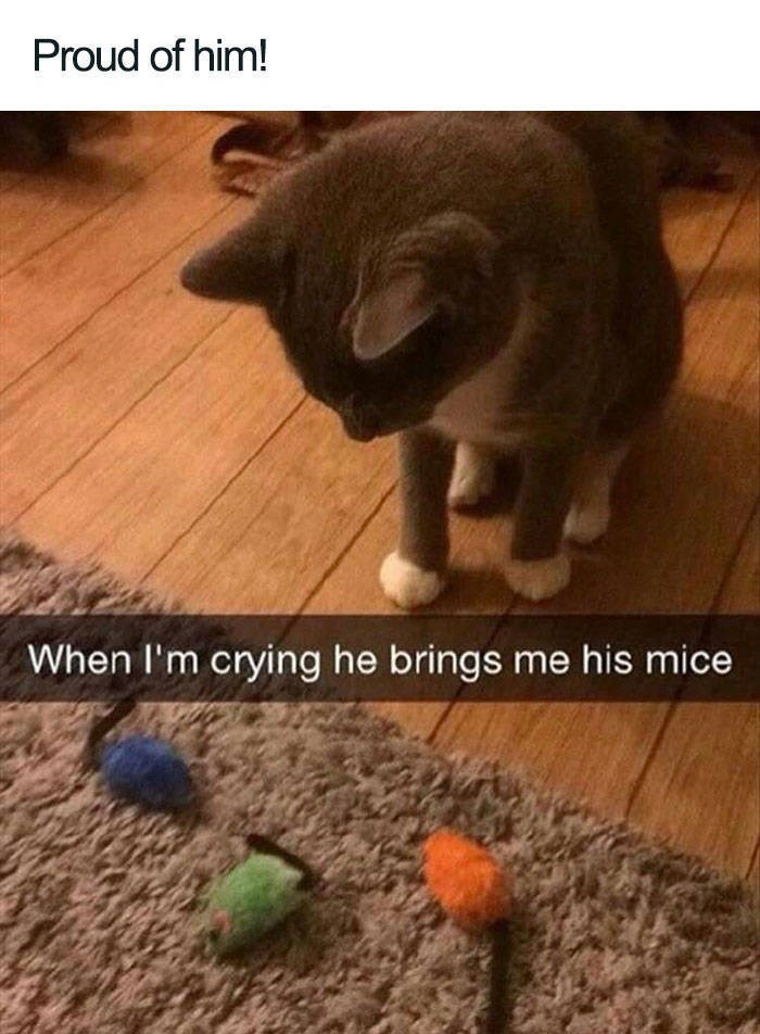 Cat - Proud of him! When I'm crying he brings me his mice
