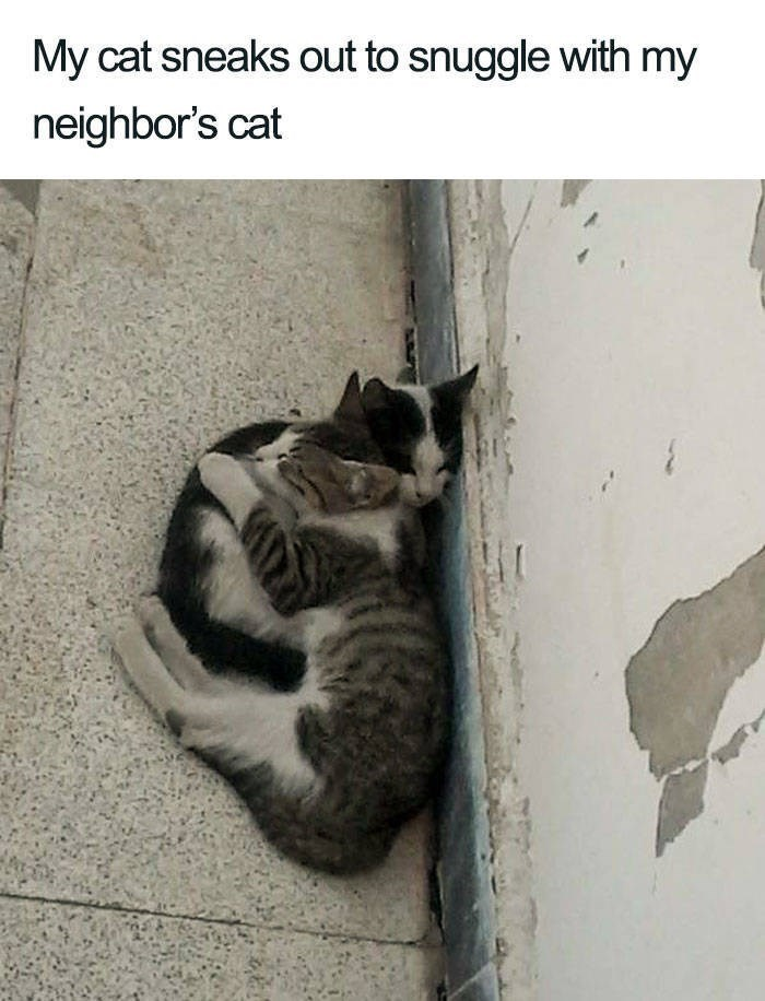Cat - My cat sneaks out to snuggle with my neighbor's cat