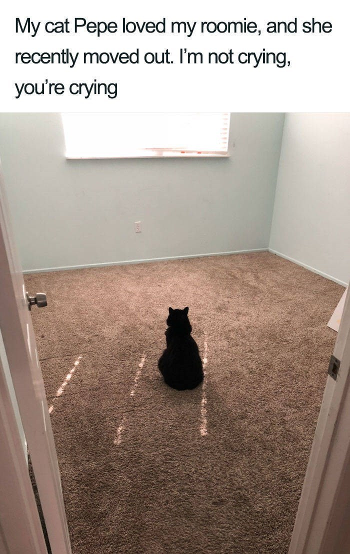 Floor - My cat Pepe loved my roomie, and she recently moved out. I'm not crying, you're crying