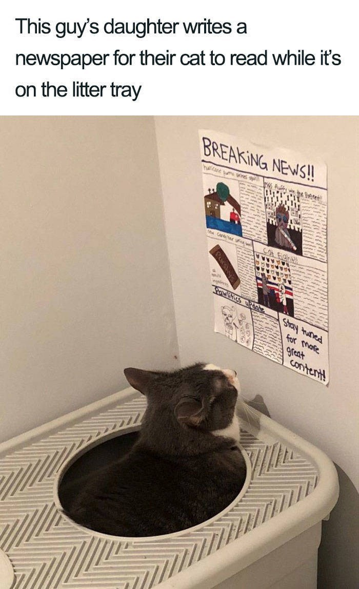 Cat - This guy's daughter writes a newspaper for their cat to read while it's on the litter tray BREAKING NEWS!! Carr Cor Figh KAA for more great content! Paumy Aaus