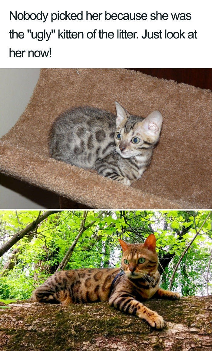 """Cat - Nobody picked her because she was the """"ugly"""" kitten of the litter. Just look at her now!"""