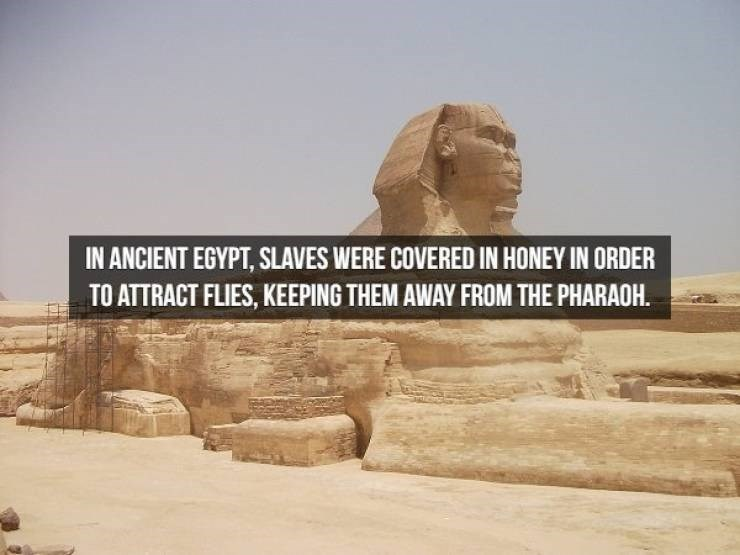 Landmark - IN ANCIENT EGYPT, SLAVES WERE COVERED IN HONEY IN ORDER TO ATTRACT FLIES, KEEPING THEM AWAY FROM THE PHARAOH.