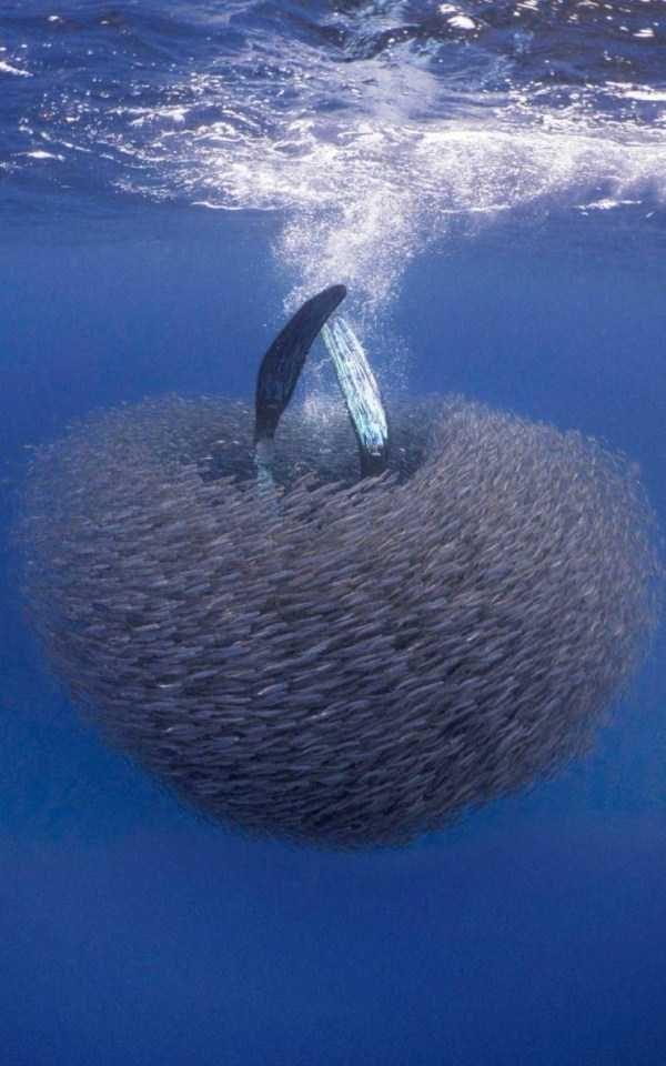 animal photo - Whale shark