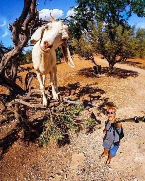 animal photo - Tree