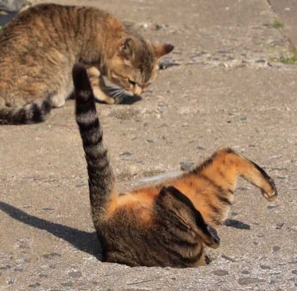 animal photo - Cat