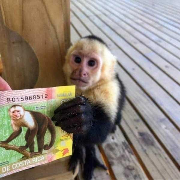 animal photo - Mammal - BO15968512 LAR DE COSTA RICA