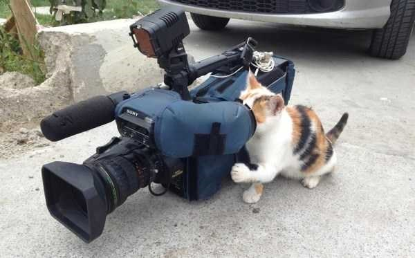 animal photo - Cat - sowe