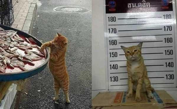 animal photo - Cat - 180 180 170 170 160 160 150 150 140 140 130 130
