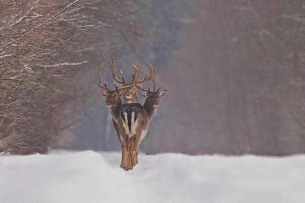 animal photo - Deer