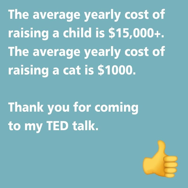 text about how raising a cat is much cheaper than a child