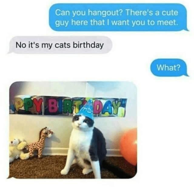 cat memes - 9338804736