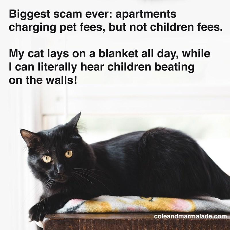 cat memes - 9338806784