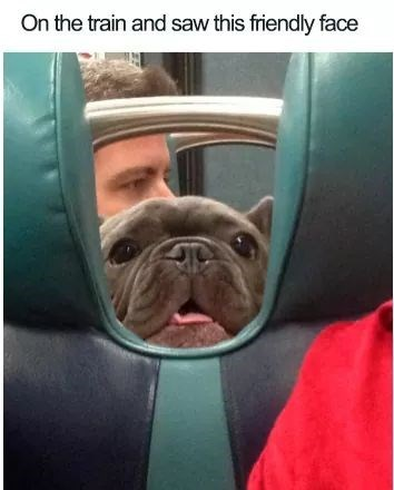 Dog - On the train and saw this friendly face