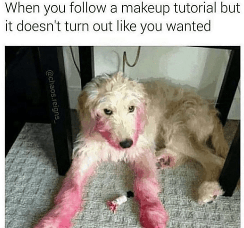 Mammal - When you followa makeup tutorial but it doesn't turn out like you wanted @chaos.reigns