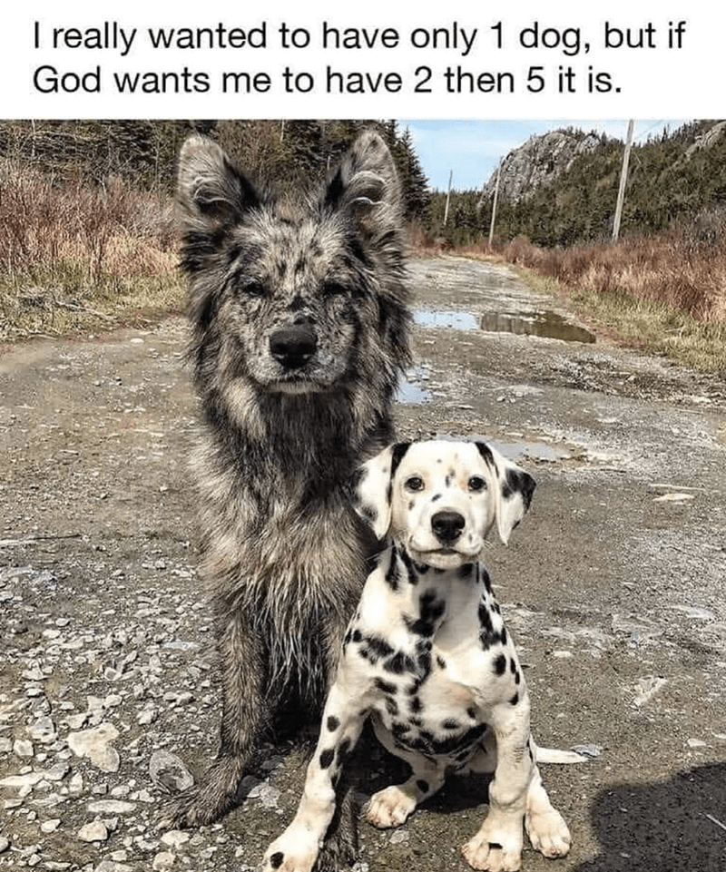 Dog - I really wanted to have only 1 dog, but if God wants me to have 2 then 5 it is.