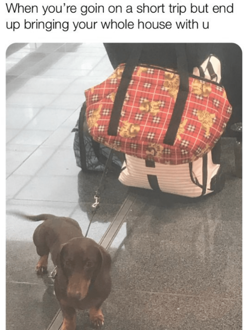 Dachshund - When you're goin on a short trip but end up bringing your whole house with u