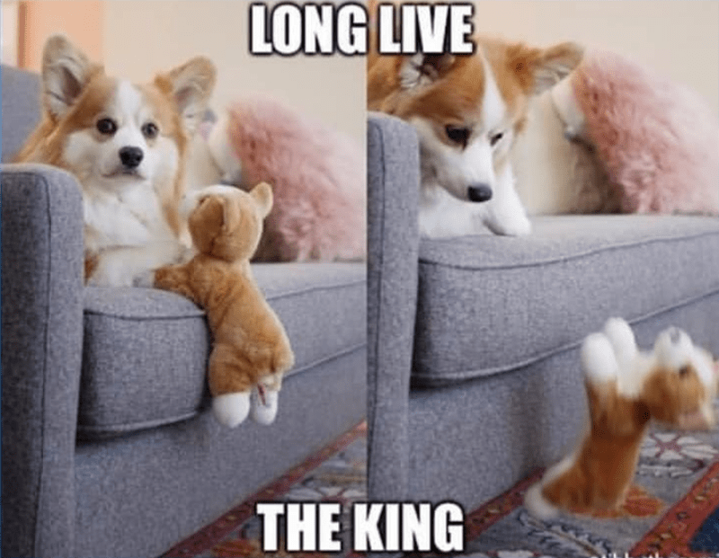 Dog - LONG LIVE THE KING