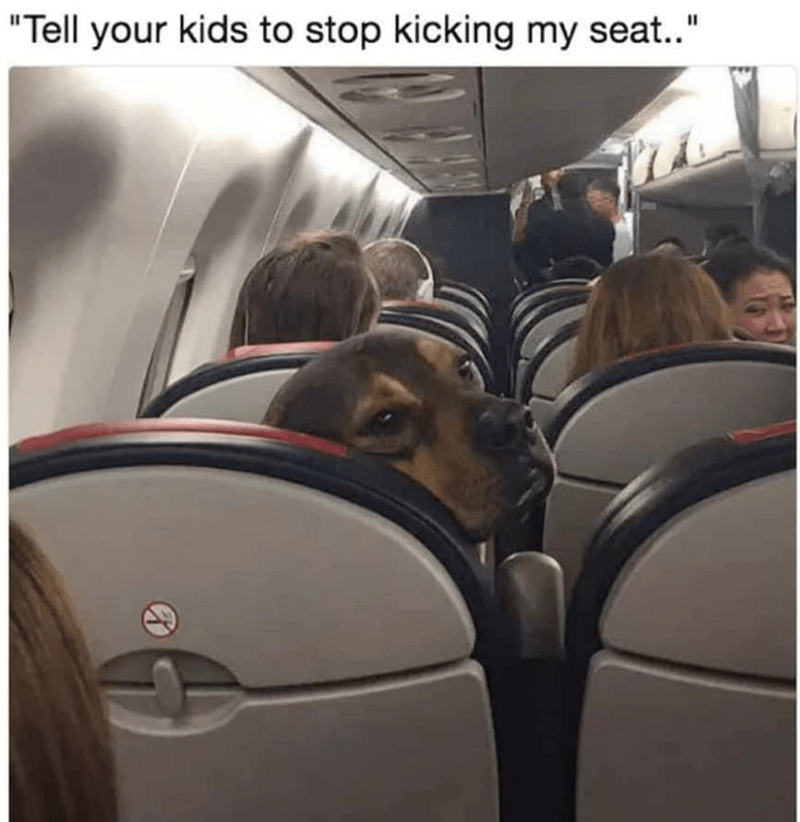 """Transport - """"Tell your kids to stop kicking my seat.."""""""