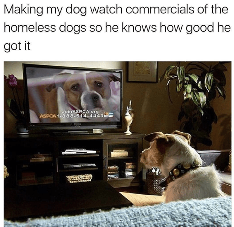 Canidae - Making my dog watch commercials of the homeless dogs so he knows how good he got it Join ASPCA.org ASPCA 1-888-514-4443