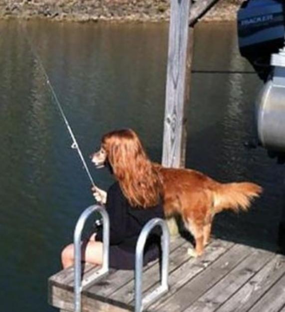 Dog - ACER
