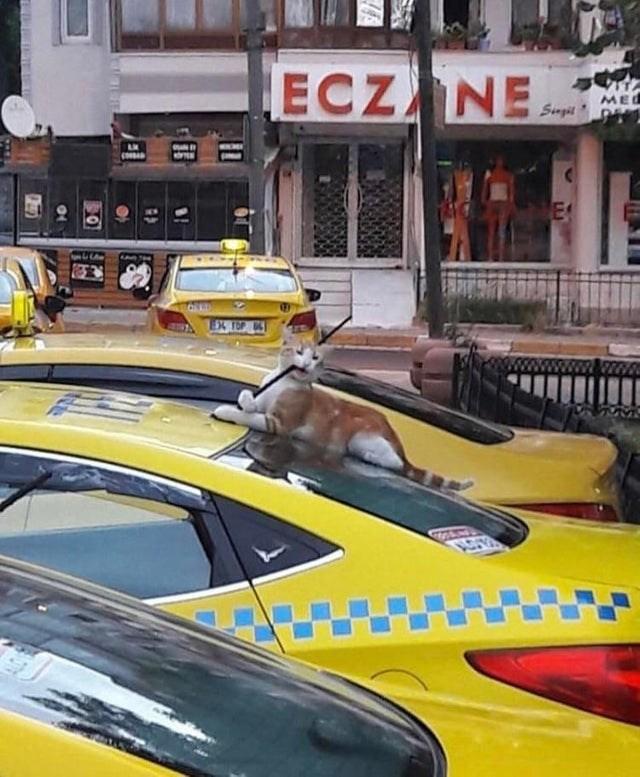 Vehicle - ECZANE Siugt EC
