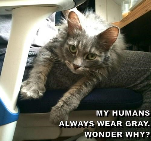 Lolcats Haha Lol At Funny Cat Memes Funny Cat Pictures With Words On Them Lol Cat Memes Funny Cats Funny Cat Pictures With Words On