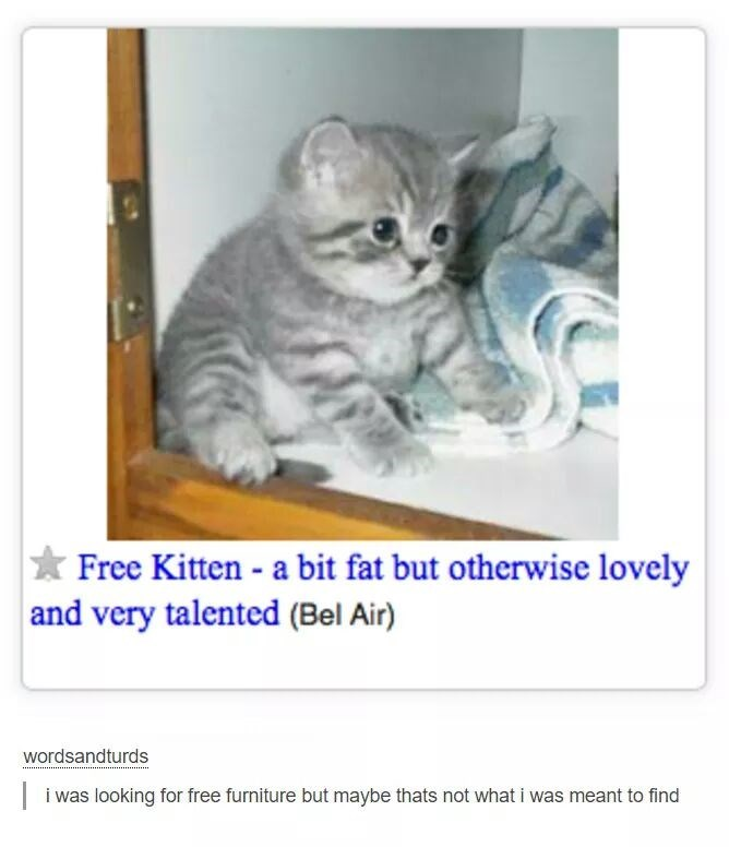 Cat - Free Kitten a bit fat but otherwise lovely and very talented (Bel Air) wordsandturds | i was looking for free furniture but maybe thats not what i was meant to find