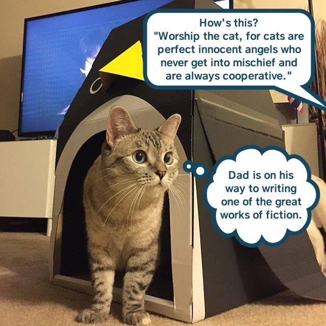 funny cat memes lolcats haha michevious cute cats lol funny cats meow cats are weird Cats not innocent funny cat memes - 9339081216