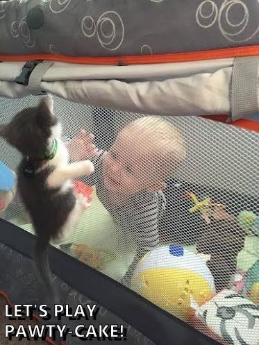 aww funny cat memes Babies lolcats adorable kitten cute cute cats funny cats meow Cats cat memes playing - 9339081984