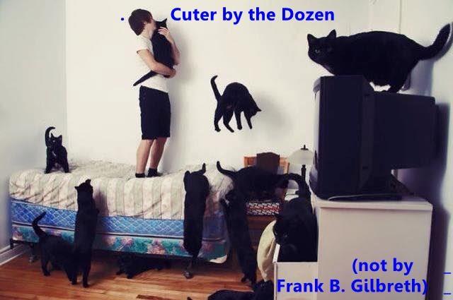 funny cat memes lolcats WoW black cats cute cute cats funny cats Photo meow Cats so many cats cat memes lots - 9339087616