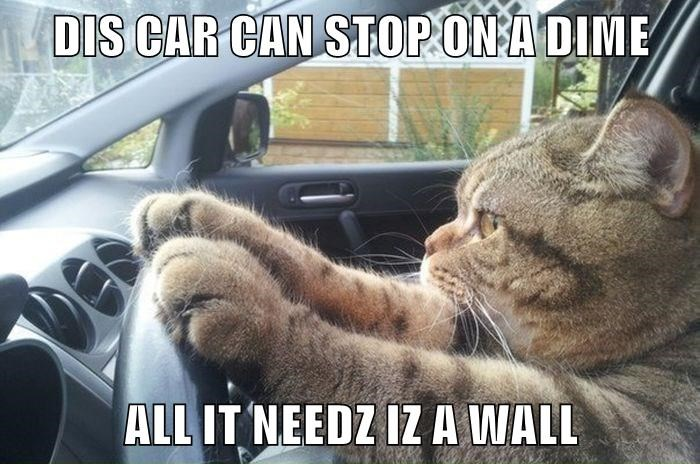 funny cat memes lolcats cat driving life on the edge cars driving cute cats funny cats Cats dangerous cat memes - 9339089152