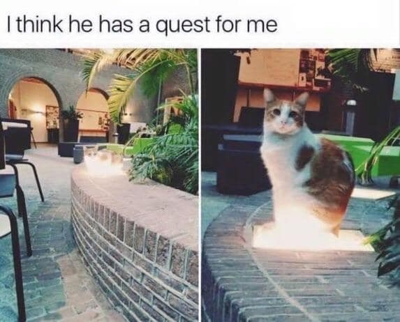 """Funny meme that reads, """"I think he has a quest for me"""" above a photo of a cat"""