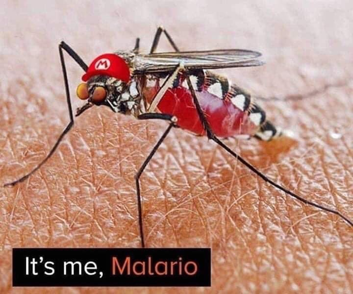 Insect - It's me, Malario