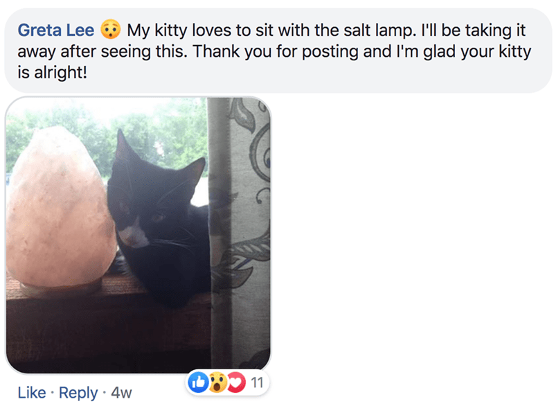 Text - My kitty loves to sit with the salt lamp. I'l be taking it Greta Lee away after seeing this. Thank you for posting and I'm glad your kitty is alright! 11 Like Reply 4w